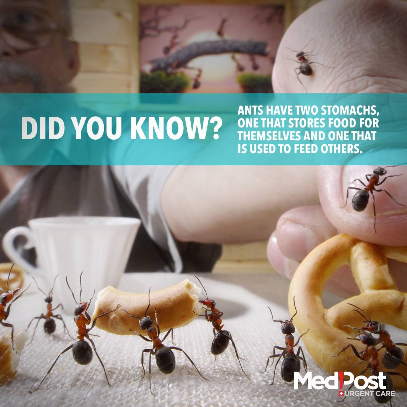 #Ants Have Two #Stomachs, One that Stores Food and one that Feeds Others.