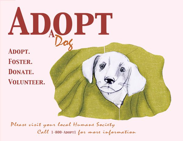 Save A Life Adopt Foster Volunteer At A Local Shelter Or Rescue Near You Animal Shelter Pet Adoption Center Dog Adoption