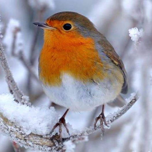 One Kind Word Can Warm Three Winter Months. ~Japanese