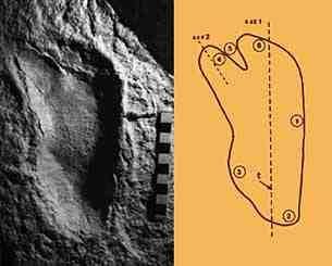 Image result for australopithecus footprints