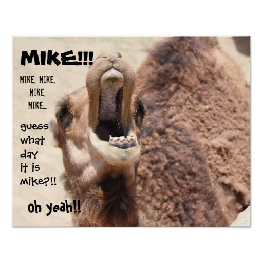 """Funny Hump Day Quotes: Funny Camel """"hump Day"""" Guess What Day It Is MIKE! Poster"""