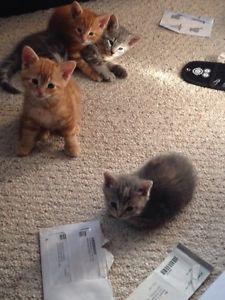 5 Ottawa Kittens For Sale