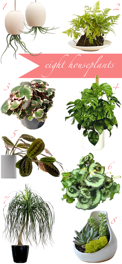 A CUP OF JO: How to buy houseplants (once and for all)