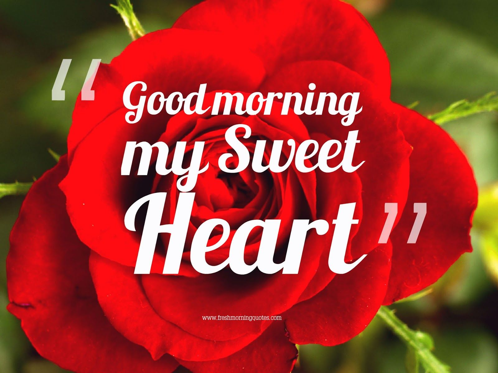 10 Beautiful Good Morning Love Wallpapers Good Morning