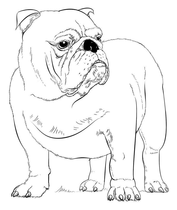 pdf Bulldog Coloring Pages - Best Coloring Pages For Kids ...