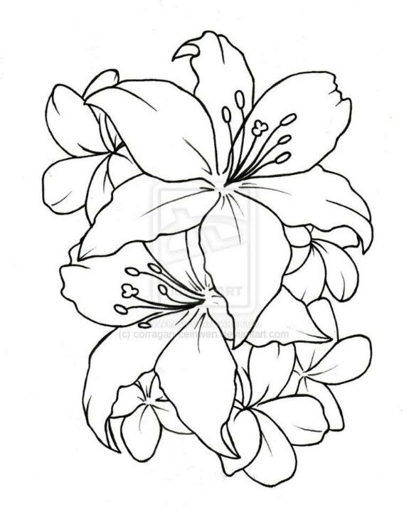 Hibiscus Flower Drawings Flower Drawing Simple Flower Tattoo