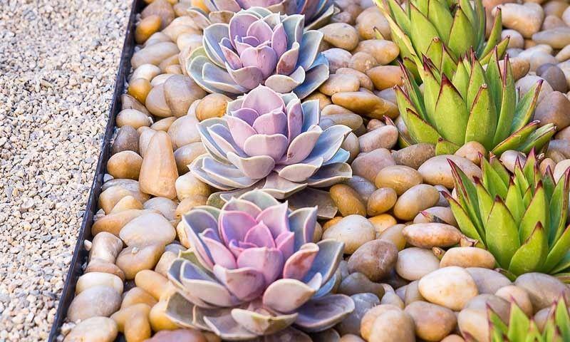 A Ravishing Zen Garden Garden Ideas Drought Succulent Landscape Design Drought Tolerant Garden