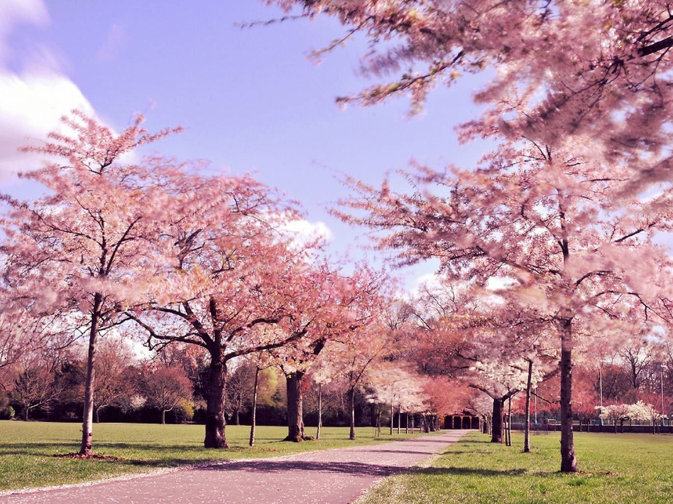 21 Photos Of Flowers Blooming All Over London Blossom Trees Pink Blossom Tree Flower Photos