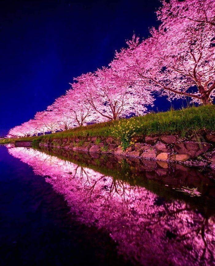 Сакура в Японии. | Фотографии природы, Натуральный и ...