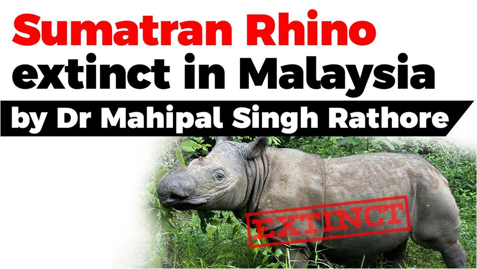 Sumatran Rhino Extinct In Malaysia Free Pdf Download Sumatran Rhino Rhino Extinct Critically Endangered Species