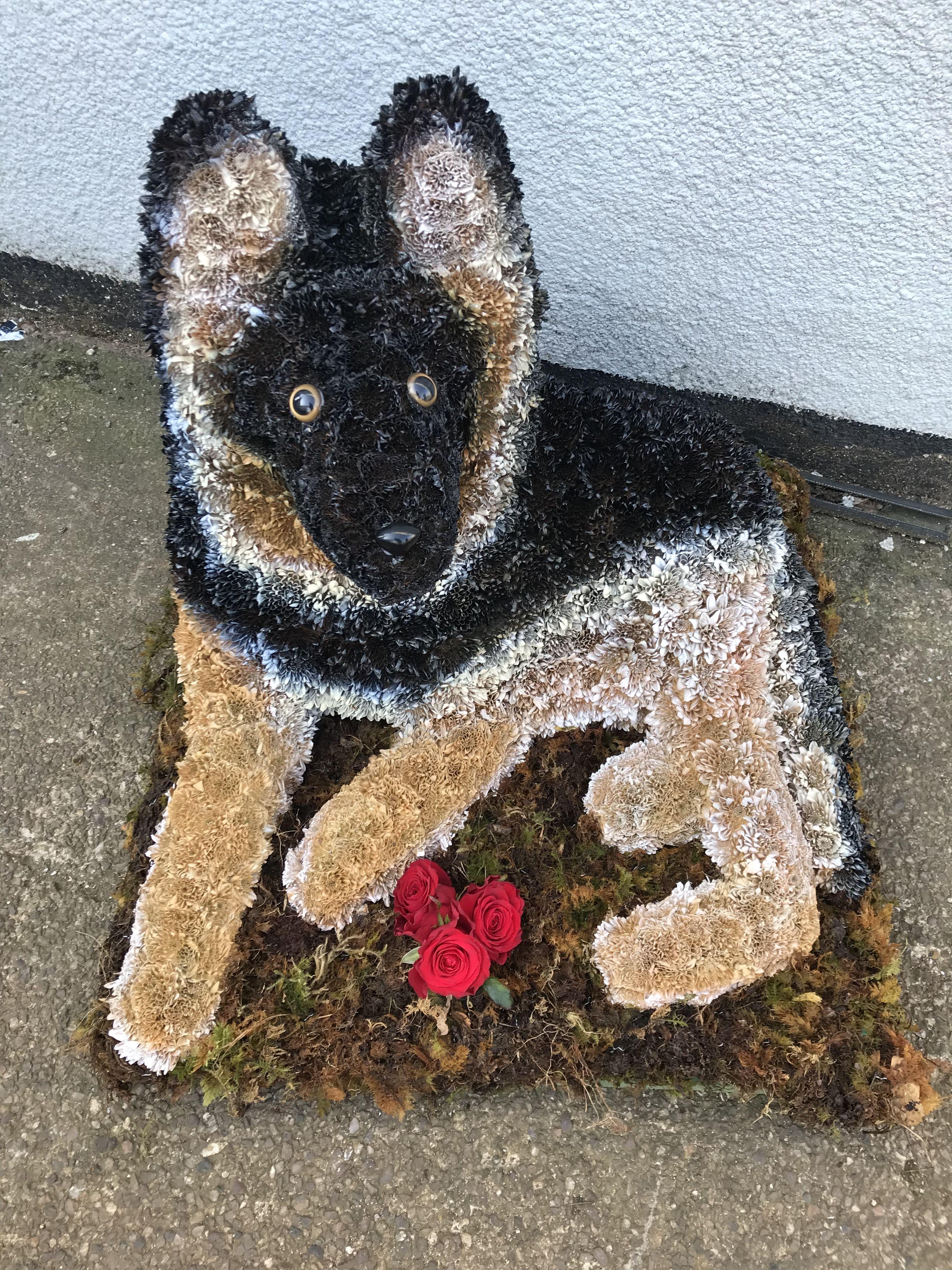Bespoke German Shepherd Funeral Tribute By Sarahs Rose Garden