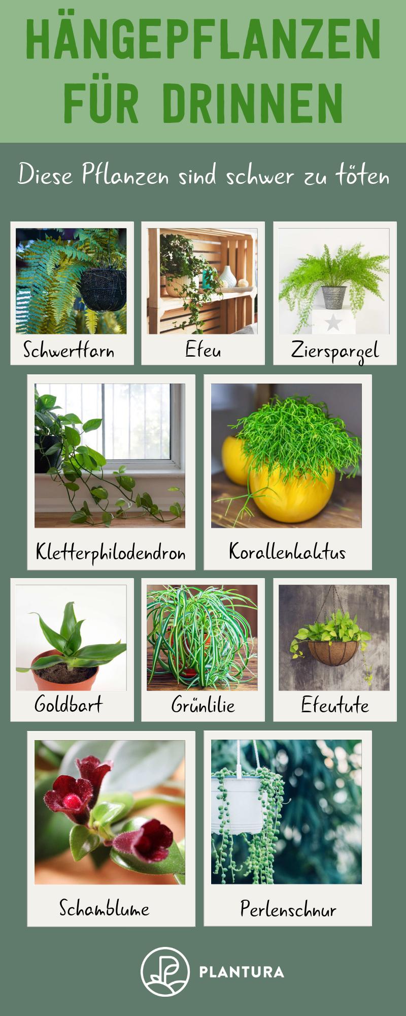 Hängepflanzen fürs Zimmer: Unsere Top 10 - Plantura