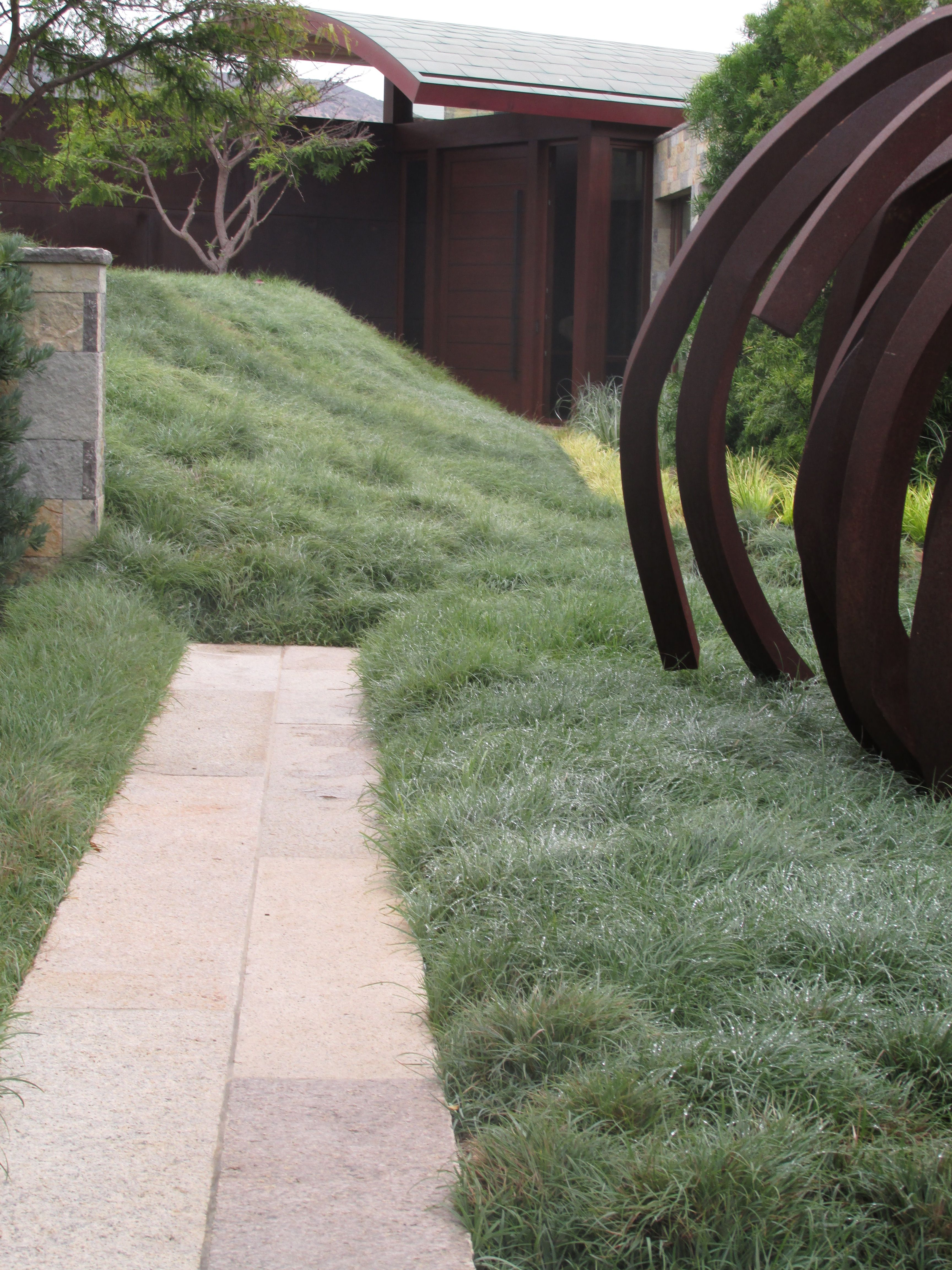 A mass planting of the blue grey sedge carex flacca an attractive low growing ground cover - Like that garten ...