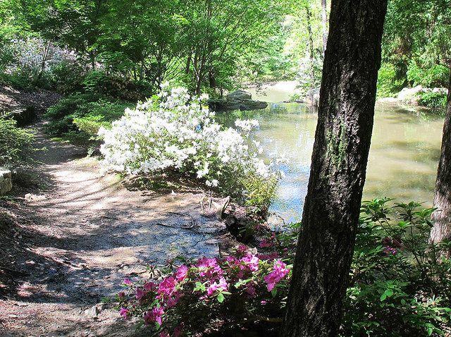2. Woodland garden, Azaleas, Garden