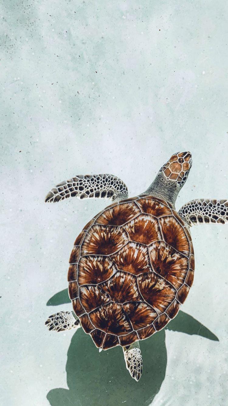 Pin by ALAYNA ⚡️ BROOKE on ANIMALS Cute turtles, Animal