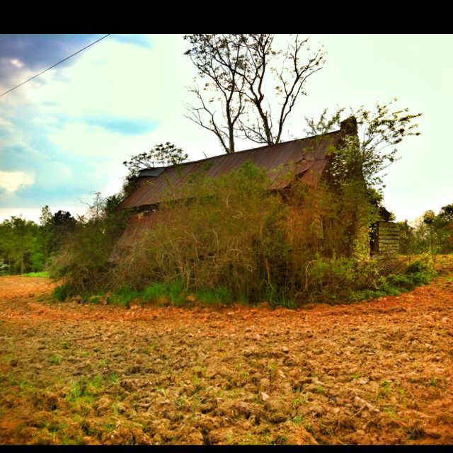 Old southern home overgrown by weeds. 4-1-12 aw