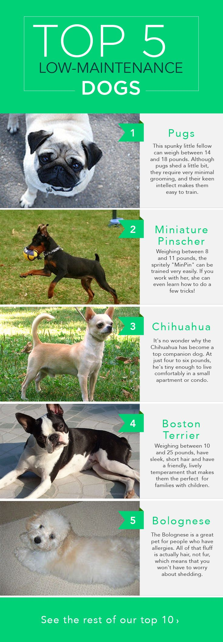 The Top 10 LowMaintenance Dogs (With images) Low