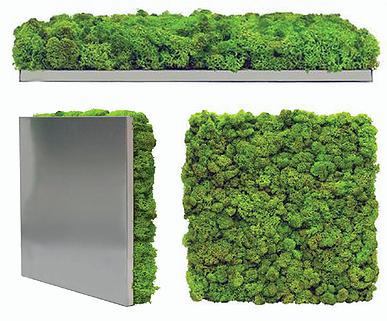 Gentil Moss Wall Art, Mosstile 100% Organic Panel Manufacturer | Scandia Moss