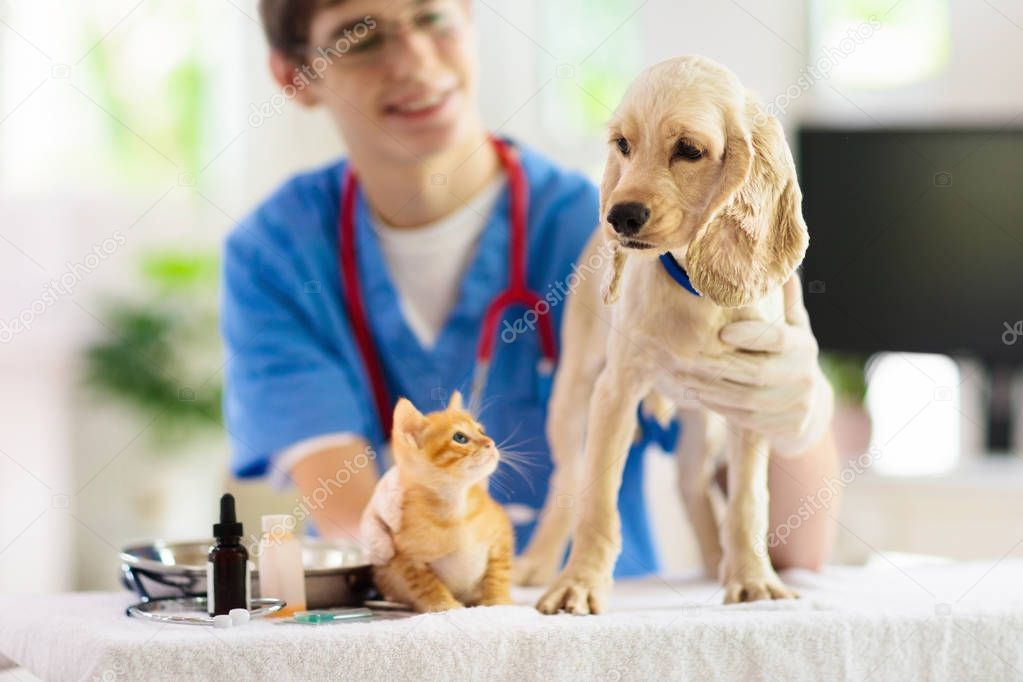 Vet With Dog And Cat Puppy And Kitten At Doctor Stock Photo Aff Cat Puppy Vet Dog Ad Pet Clinic Dog Cat Puppies