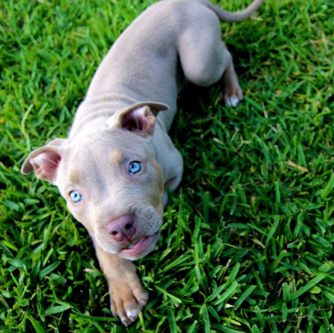 Which Dog Breed Do You Talk Like Puppies Puppy Sitting Dog Breeds