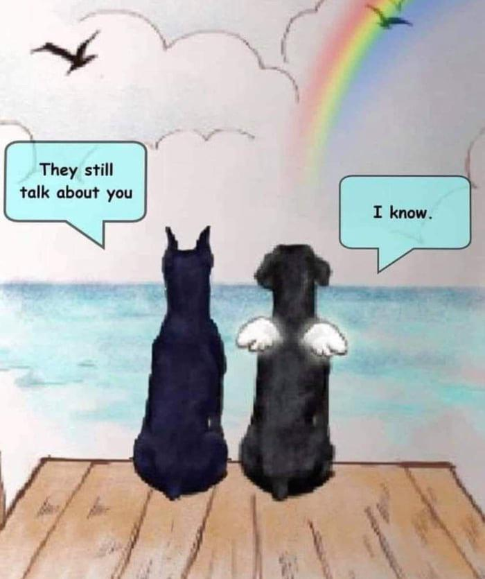 Miss You Boy Miss My Dog Pet Grief Dog Quotes