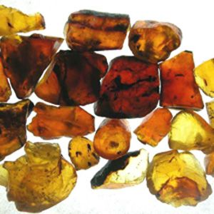 Amber is fossil tree resin. Although not mineralized, it is often classified as a gemstone.  A common misconception is that amber is made of tree sap; it is not. Sap is the fluid that circulates through a plant's vascular system, while resin is the semi-solid amorphous organic substance secreted in pockets and canals through epithelial cells of the plant.   Because it used to be soft and sticky tree resin, amber can sometimes contain insects and even small vertebrates.