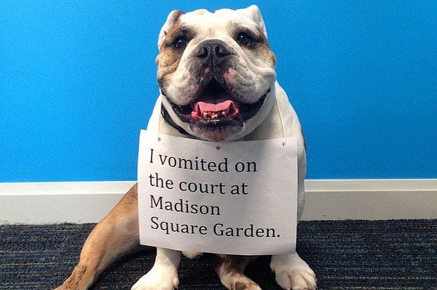 Butler University S Real Life Bulldog Mascot Is The March Madness