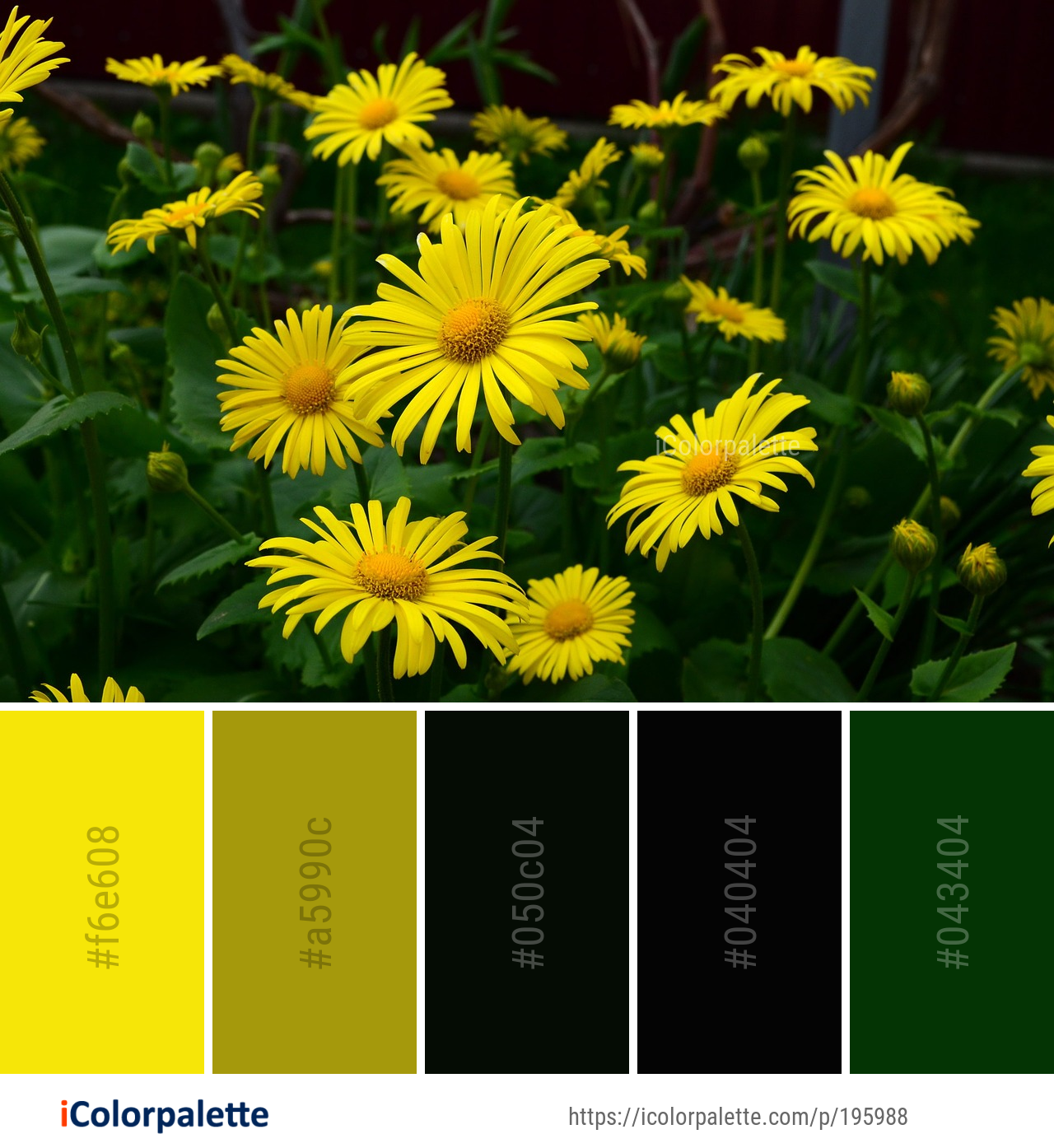 Color Palette Ideas From 8835 Flower Images Icolorpalette Color Palette Yellow Plants Plant Images