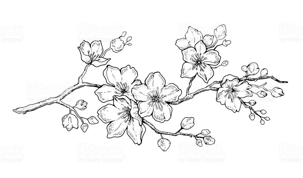Cherry Flower Blossom Botanical Art Spring Almond Sakura Apple Tree Branch Hand Draw Doodle Vector Black Ink Art Cherry Blossom Art Cherry Blossom Drawing