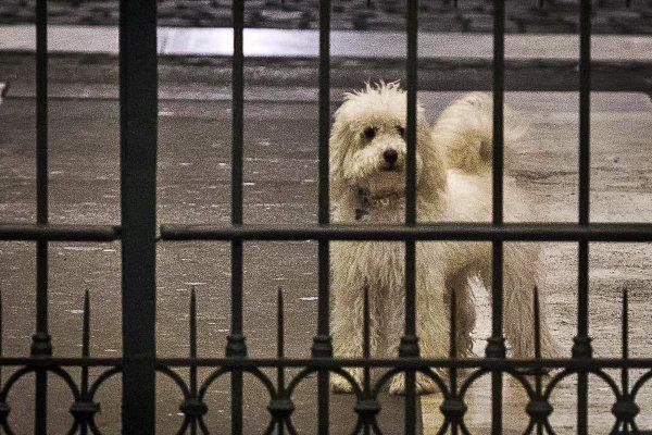 E' Libero a riportare l'allarme lanciato dall'Aidaa, l'Associazione italiana difesa animali e ambiente, preoccupata per Dudù, http://tuttacronaca.wordpress.com/2013/12/01/allarme-dudu-e-stressato-e-depresso/