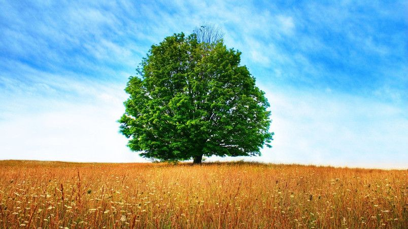 The Tree Of Life Hd Wallpaper Wallpaper Fotografi Ide