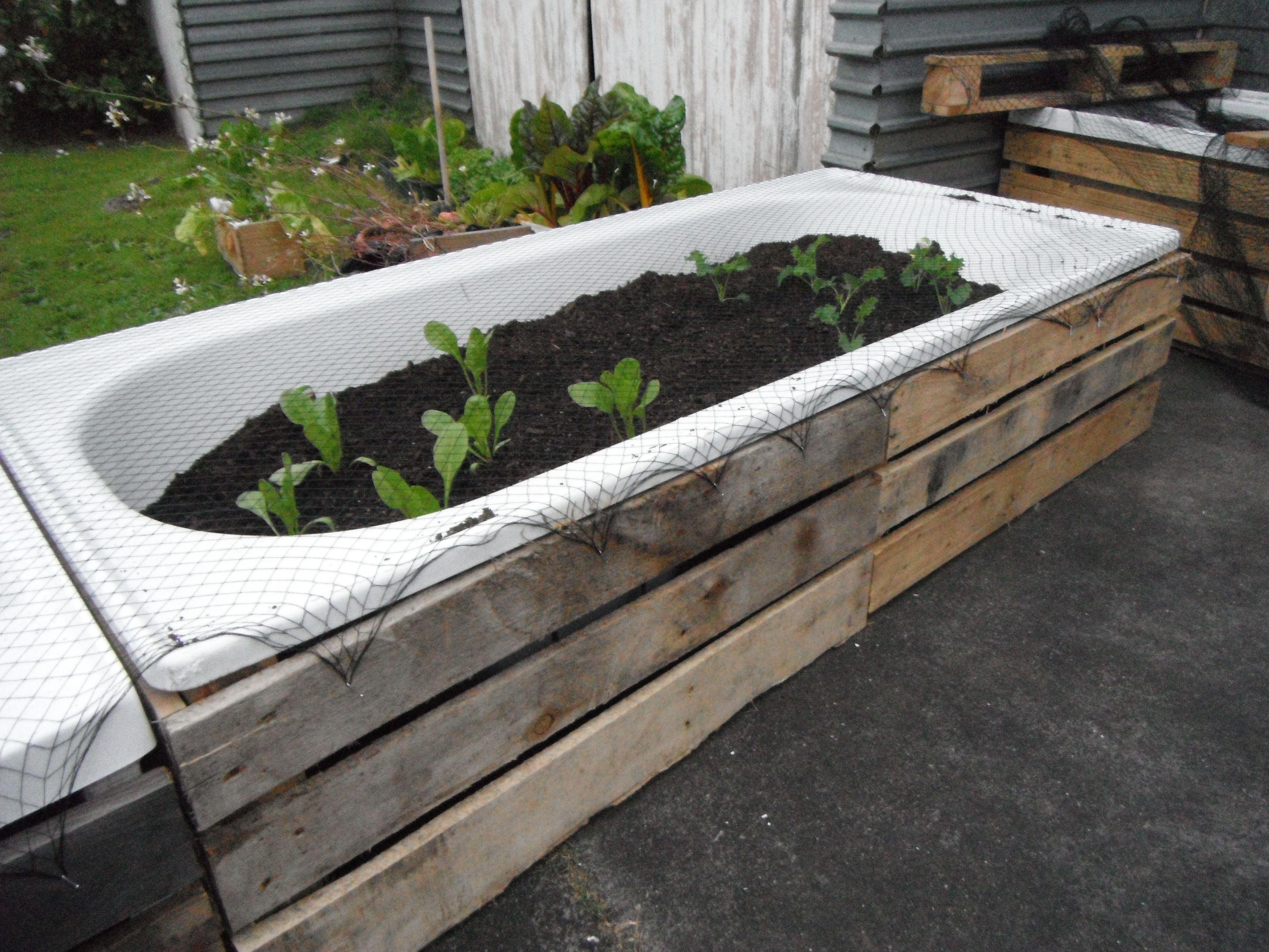 bathtub gardens garten pinterest garten garten ideen und gem segarten. Black Bedroom Furniture Sets. Home Design Ideas