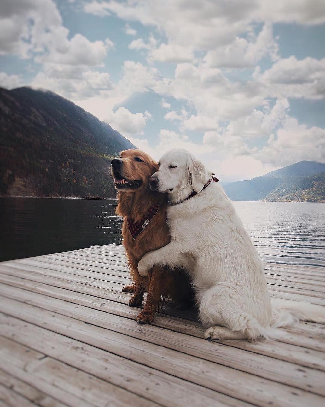 Tag Someone Who Loves Nature Sullivan Lake Alberta Canada Photo