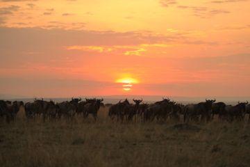 Massai Mara!!! - http://overlandsphere.com/overland-travel/africa/east-africa/kenya/massai-mara/89467