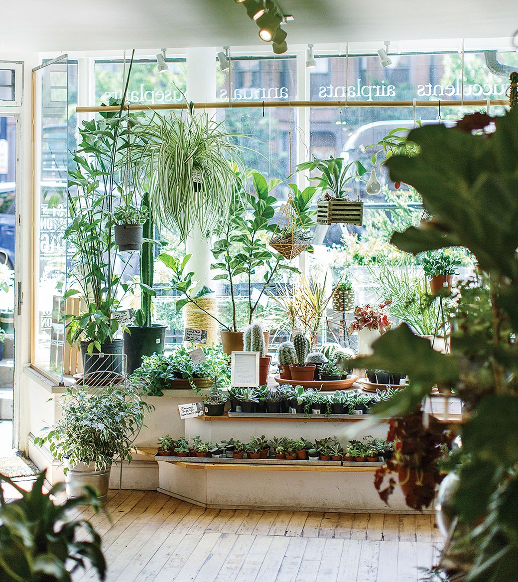 8 Plant Shops You Need To See   Plants, Water features and Interiors