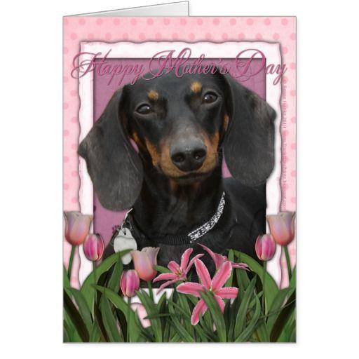 Mothers Day - Pink Tulips - Dachshund - Winston @creativework247