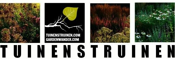 GO WILD! Verwilderen met Stinzenplanten | TUINENSTRUINEN.COM