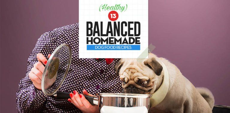 13 Balanced Homemade Dog Food Recipes Fur Baby Board Pinterest