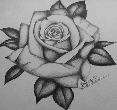 By Aneta Bayerova Rose Flower Tattoos Roses Drawing Rose Outline Tattoo