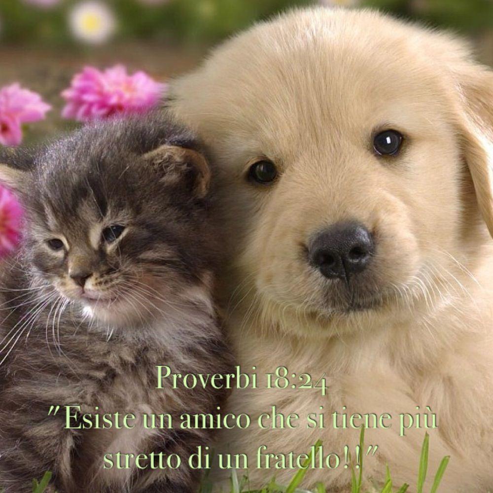 Proverbs bible bibbia pinterest proverbs psalm and