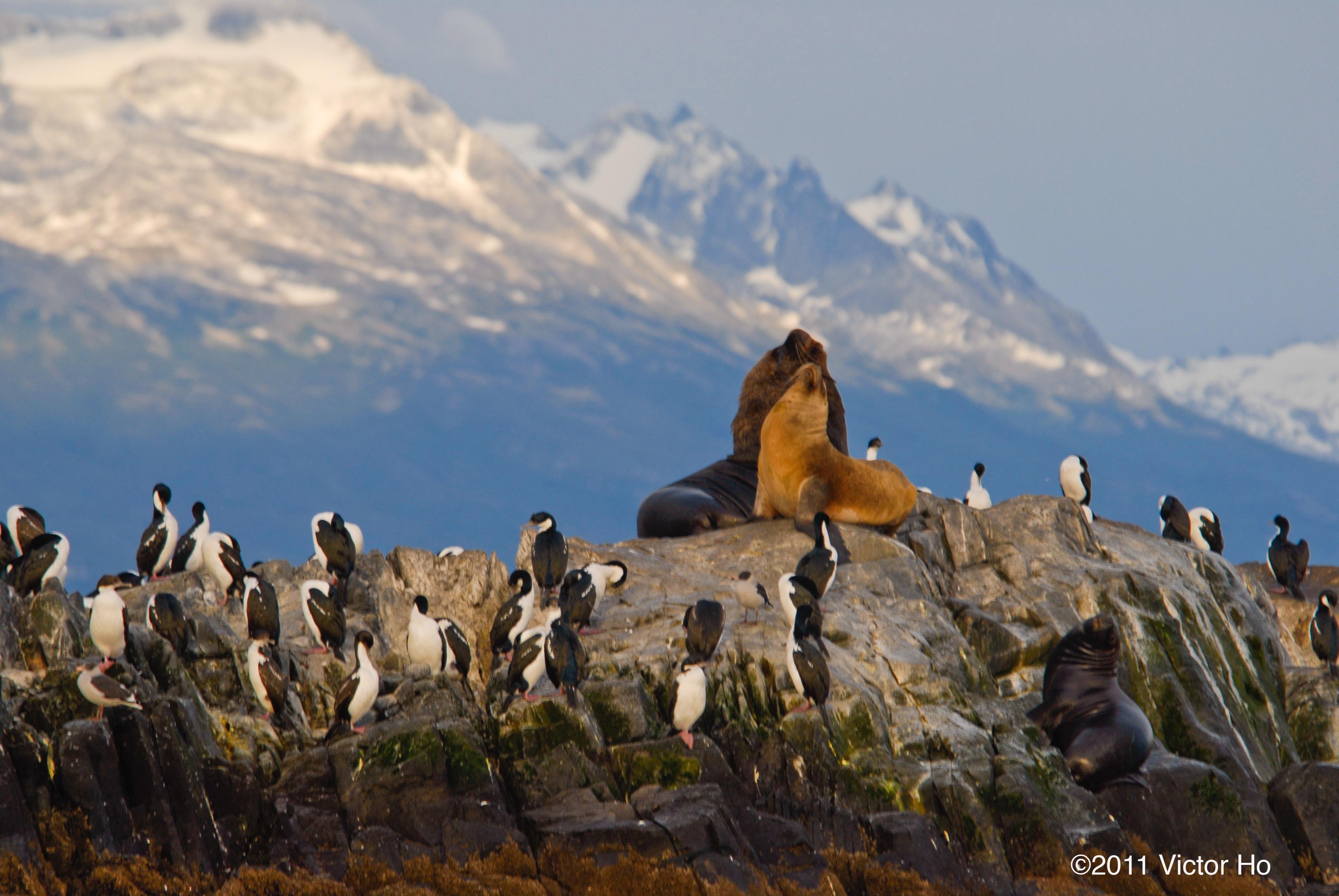 Beagle Channel Tierra Del Fuego Tierra Del Fuego Chile