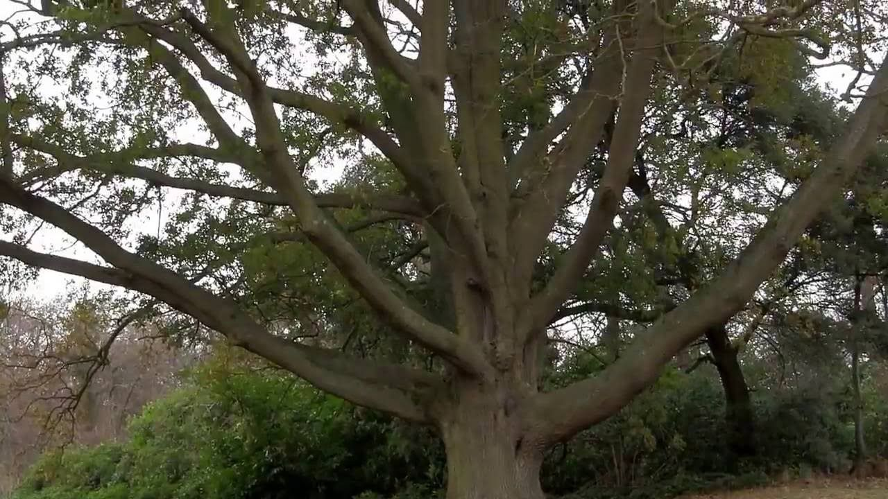 Image result for mystory tree in japan railway station