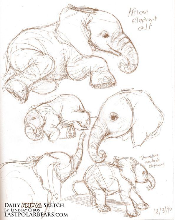 Daily Animal Sketch – African Elephant Calf – Last of the Polar Bears