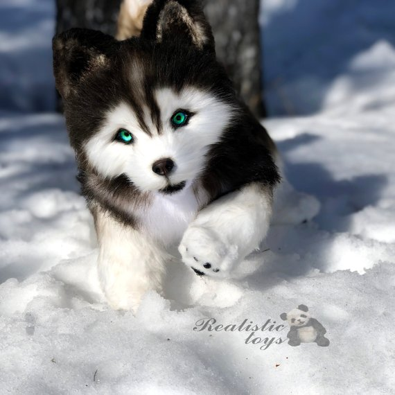 Ooak Plush Siberian Husky Puppy Realistic Collectible Teddy Toy