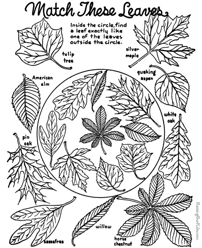 Free printable leaf matching and identification coloring