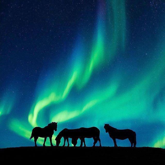 The Highlands, Iceland Photo by @dkphotographyau #WildlifePlanet