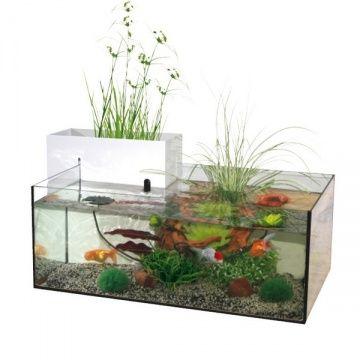 un vrai petit bassin d 39 int rieur aquariums pinterest petit bassin bassin et vrai. Black Bedroom Furniture Sets. Home Design Ideas
