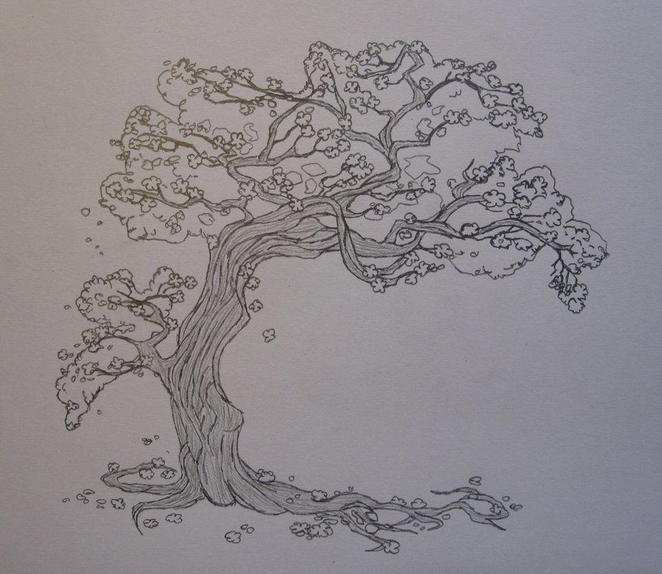 Cherry Tree Sketch Tree Drawing Tree Sketches Tree Illustration