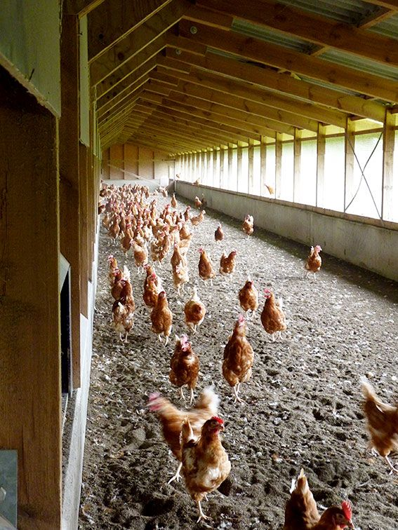 Eier von Hof Poppe