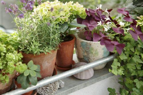 Balkonpflanzen Fur Die Kalte Jahreszeit Arten Balkon Pinterest